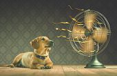 picture of dog eye  - The dog is cooling down with the fan while watching the yellow ribbons in motion - JPG