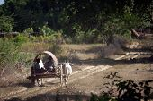 Ox cart to the village.