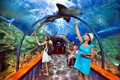 TENERIFE, SPAIN - JULY 15: Aquatic tunnel in the Loro parque aquarium on july 15, 2014 in Tenerife,