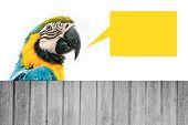 Macaw Parrot Wit Ha Speech Bubble