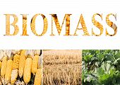 Biomass wording