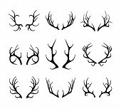 pic of antlers  - Vector deer antlers isolated on white - JPG