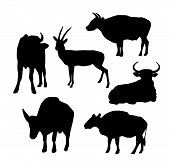 Cow, Bull And Deer Black Silhouette On White Background. Vector