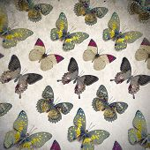 lots of Butterfly background image