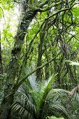 stock photo of tropical rainforest  - Lush green dense tropical New Zealand forest - JPG