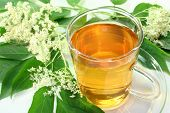 picture of elderflower  - a cup of Elderflower tea with fresh flowers - JPG