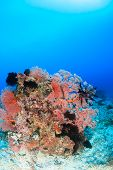 Colorful coral pinnacle on a tropical reef