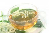 picture of elderflower  - a cup of elderflower tea with a sprig of fresh flowers and leafs - JPG