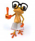 image of orange frog  - Fun frog - JPG