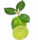 picture of lime-blossom  - Lime citrus fruit with leaves close up isolated on white background - JPG
