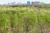 pic of house woods  - modern urban houses and green forest in spring day - JPG