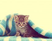 picture of blue tabby  - funny cute tabby kitten and a blue blanket - JPG