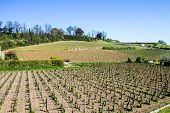 foto of bordeaux  - growth of a vineyard in the countryside of Saint Emilion Bordeaux France - JPG