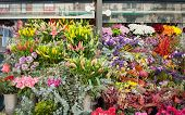 picture of flower shop  - Flowers outside of flower shop - JPG