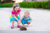 picture of baby animal  - Kids playing with a hedgehog - JPG