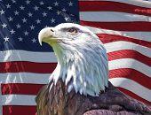 Águila patriótica