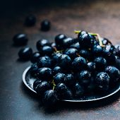 Bunches Of Fresh Ripe Red Grapes On A Metal Tray Textural Table Background. Dark Grapes, Blue Grapes poster