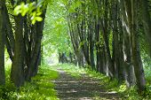 basswood alley or park