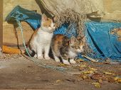 Homeless Wild Cats On Dirty Street. Stray Cats In The City poster