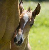 Foal M