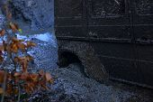 Wheel In Deep Puddle Of Mud. Dangerous Expedition Concept. Offroad Tire Covered With Mud On Nature B poster