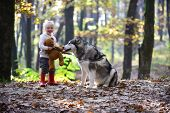 Active Rest And Child Activity On Fresh Air Outdoor. Active Girl Play With Dog In Autumn Forest. poster