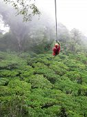 stock photo of tarzan  - a man ziplines through the cloud forest of Monteverde Costa Rica - JPG