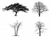 Black Tree Silhouettes Isolated On White Background. The Collection Of Silhouette Trees poster