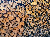 Stacked Wood Cut. Cross Section Of Tree Trunks Background. Decoration Of Cutting Tree. Cutting Tree  poster