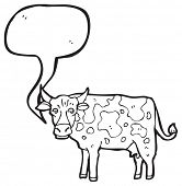 mooing cow