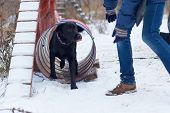 The Black Dog Obediently Performs Winter Training poster