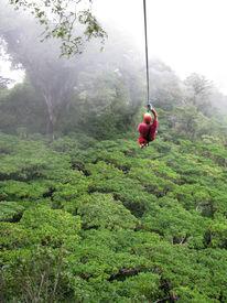 foto of tarzan  - a man ziplines through the cloud forest of Monteverde Costa Rica - JPG