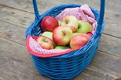 Basket with fresh red and yellow apples in summer garden on wooden table