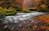 stock photo of bohemia  - View of a beautiful autumn creek in Czech - JPG