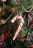 Festive Candy Canes