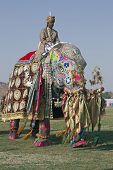 Mahout Riding A Decorated Elephant