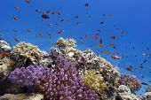 coral reef with soft and hard corals and exotic fishes at the bottom of tropical sea
