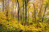 Autumn Forest Western Nc Fall Foliage Trees Scenic Nature Photography