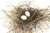 Pigeon Nest