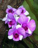 Orchids 074