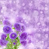 violet  aster flowers on bokeh background