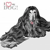 Vector Domestic Dog Black Afghan Hound Breed