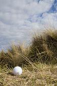 Golf Ball In Dunes