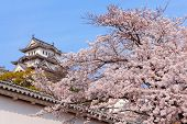 Pink Cherry Blossoms Flower With Japan Castle