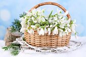 Beautiful bouquet of snowdrops in wicker basket on snow