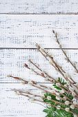Beautiful pussy-willow twigs on wooden background