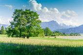 Tree in a austrian summer landscape