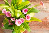 stock photo of arum  - Overhead view of a bunch of beautiful fresh pink calla or arum lilies Zantedeschia aethiopica with their green leaves on an old rustic wooden table with copyspace - JPG