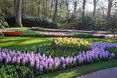 Famous flowers park Keukenhof in Netherlands also known as the Garden of Europe, is the world's largest flower garden. poster