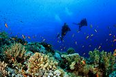 Scuba Diving on coral reef in ocean with fish
